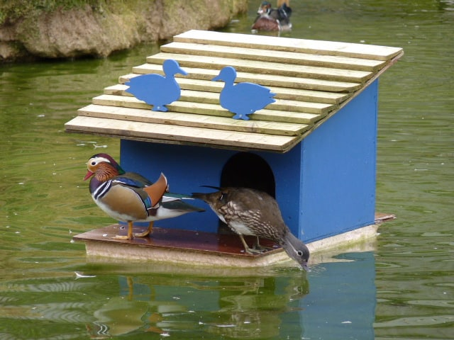 Wishing Wells Farm Hand Crafted Animal Housing for Ducks Sussex
